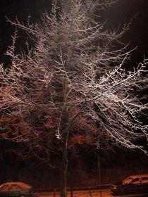 Winterbaum von Kira Homola