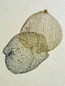 Feinstruktur (Physalis) by Dagmar Laimgruber