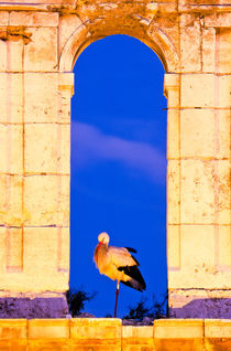Urban white stork by Enrique del Campo