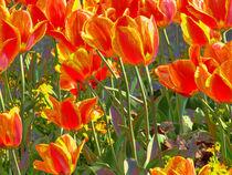 Tulpenmeer by Jutta Ehrlich