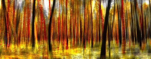Wald3a
