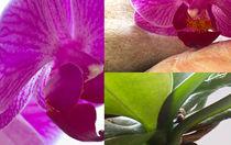 Orchidee by timberworld