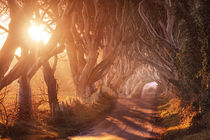 Dark-hedges-1-final-small