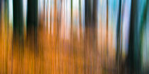 Wald Impression Orange von Thomas Joekel