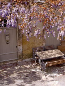 Wisteria by Benoît Charon