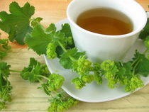 Frauenmantel Tee von Heike Rau
