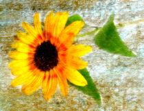 Sonnenblüte by Kerstin Runge