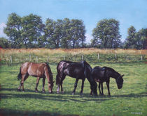 three horses in field von Martin  Davey