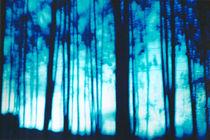 Blue Twilight Forest Landscape by Sharon Harvey