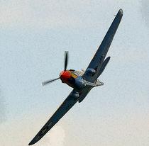 P40 Warhawk von Nigel  Bangert