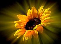 Sonnenblume  von Barbara  Keichel
