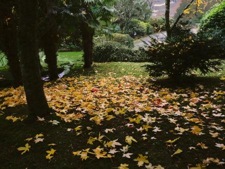 Autumn-in-roseland0735