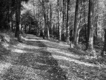 Walk-in-the-woods0665