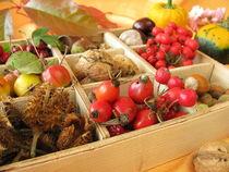 Setzkasten mit Walnüssen, Kastanien und anderen Herbstfrüchten by Heike Rau