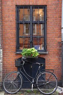 Copenhagen window by Milena Zindovic