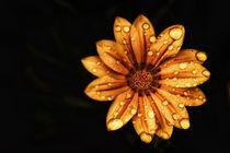 Wet-flowers-v-8