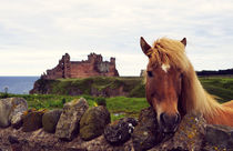 Lovely horse and Tantallon Castle by RicardMN Photography