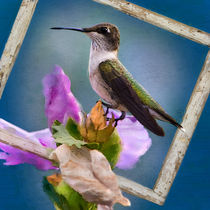 Hummingbird Framed by Betty LaRue