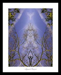 Reaching the Sky by Alejandro Campos