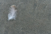 Feather by Ross Woodhall