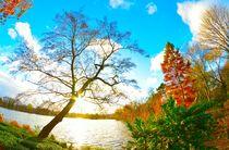 Colourful Autumn von Andrea Capano