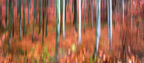 Roter Wald von Thomas Joekel
