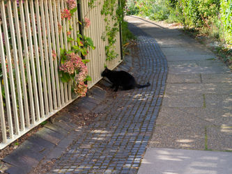 Cat-and-fence0304