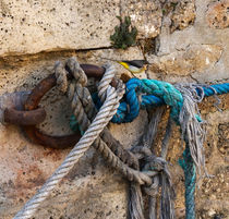 Wagtail and Mooring Rope by Louise Heusinkveld