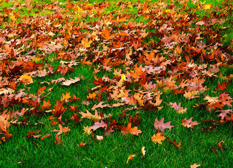 Oak-leaves0501