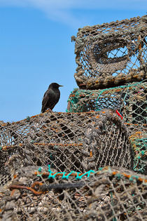 Starling on Lobster Pots von Louise Heusinkveld