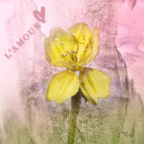 Yellow Wildflower Love von Betty LaRue
