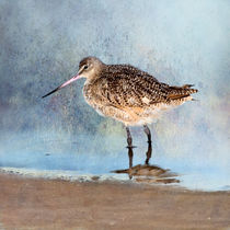 Marbled Godwit von Betty LaRue