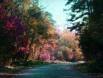 Die Straße durch den Wald by Angela Bruno