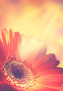 Abstract floral backgrounds  by Dmytro Tolokonov
