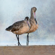 Marbled Godwit Pair by Betty LaRue
