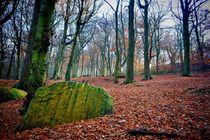 Chevin Forest Park #1 von Colin Metcalf