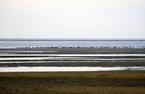 Seevögel von Jens Berger