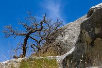 Baum vor Felsen by timberworld