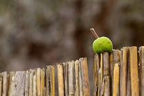 Apfel aufgespießt by timberworld