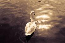 The Swan von Alexander Huber
