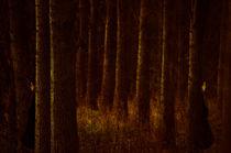 The Sentinels von Dawn Cox