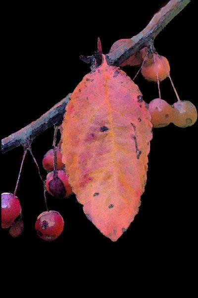 Crabapples