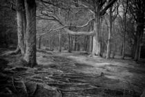 Chevin Forest Park #3 Mono by Colin Metcalf