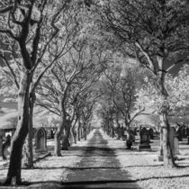 Cemetery path. by Mark Aynsley