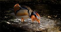 Ente auf Eis / Duck on ice von Barbara  Keichel