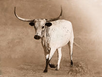 Texas Longhorn von Betty LaRue