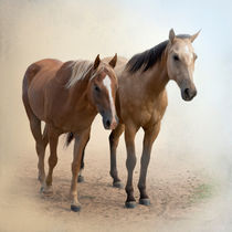 Horse Companions by Betty LaRue