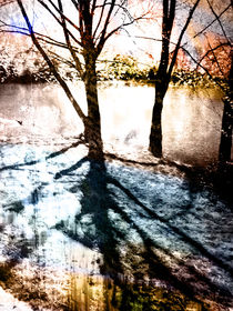 Through The Trees by florin