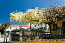 Spring in Portugal by Maciej Markiewicz
