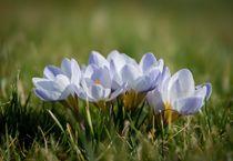 Flowers by Maciej Markiewicz